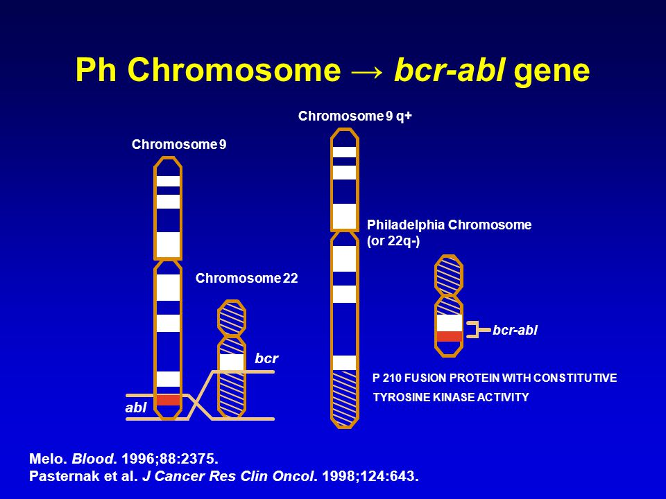 Melo. Blood. 1996;88:2375. Pasternak et al. J Cancer Res Clin Oncol. 1998;124:643. Ph Chromosome → bcr-abl gene P 210 FUSION PROTEIN WITH CONSTITUTIVE