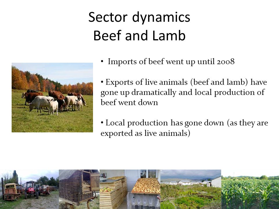Sector dynamics Beef and Lamb Imports of beef went up until 2008 Exports of live animals (beef and lamb) have gone up dramatically and local production of beef went down Local production has gone down (as they are exported as live animals)
