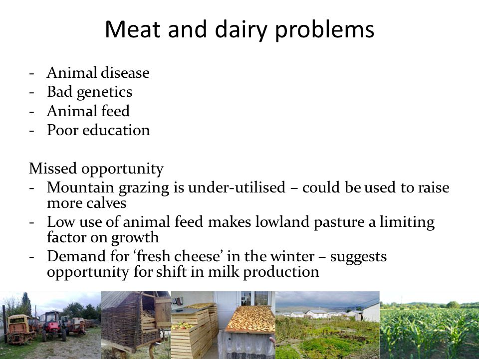 Meat and dairy problems -Animal disease -Bad genetics -Animal feed -Poor education Missed opportunity -Mountain grazing is under-utilised – could be used to raise more calves -Low use of animal feed makes lowland pasture a limiting factor on growth -Demand for 'fresh cheese' in the winter – suggests opportunity for shift in milk production
