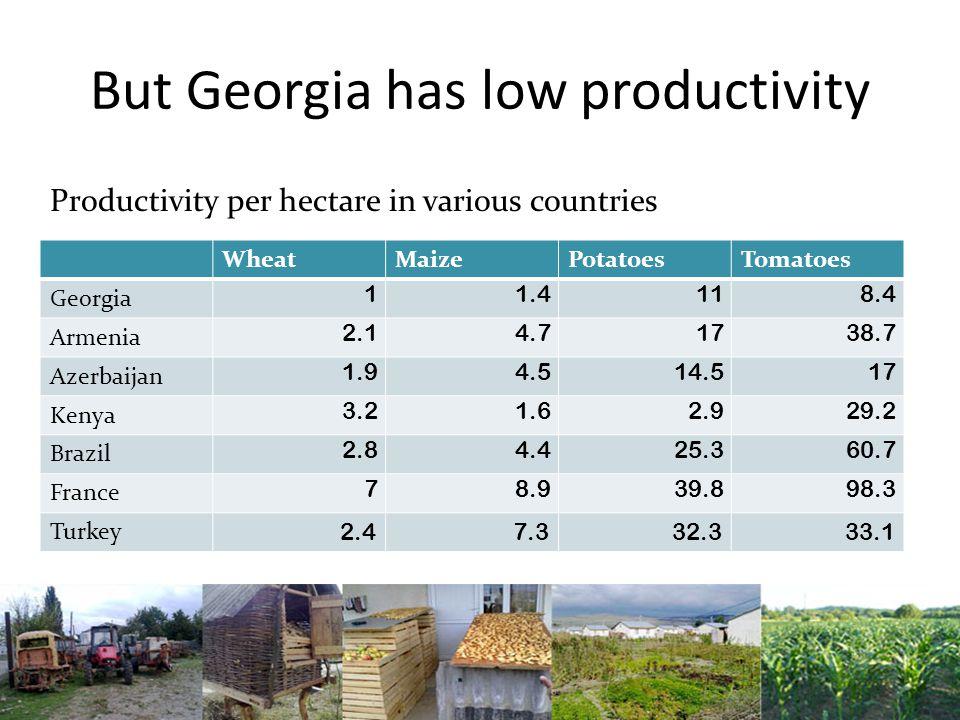 But Georgia has low productivity WheatMaizePotatoesTomatoes Georgia 11.4118.4 Armenia 2.14.71738.7 Azerbaijan 1.94.514.517 Kenya 3.21.62.929.2 Brazil 2.84.425.360.7 France 78.939.898.3 Turkey 2.47.332.333.1 Productivity per hectare in various countries