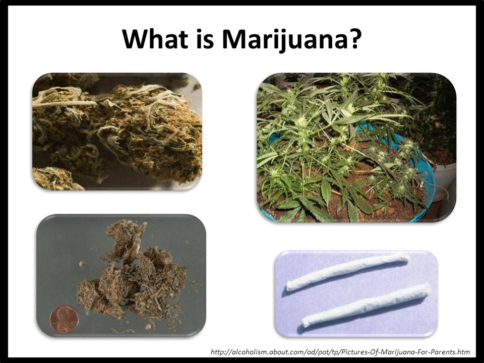 What is Marijuana http://alcoholism.about.com/od/pot/tp/Pictures-Of-Marijuana-For-Parents.htm