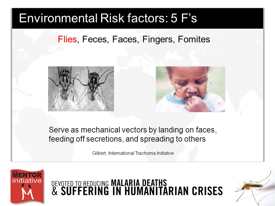Flies, Feces, Faces, Fingers, Fomites Gilbert; International Trachoma Initiative Environmental Risk factors: 5 F's Serve as mechanical vectors by landing on faces, feeding off secretions, and spreading to others