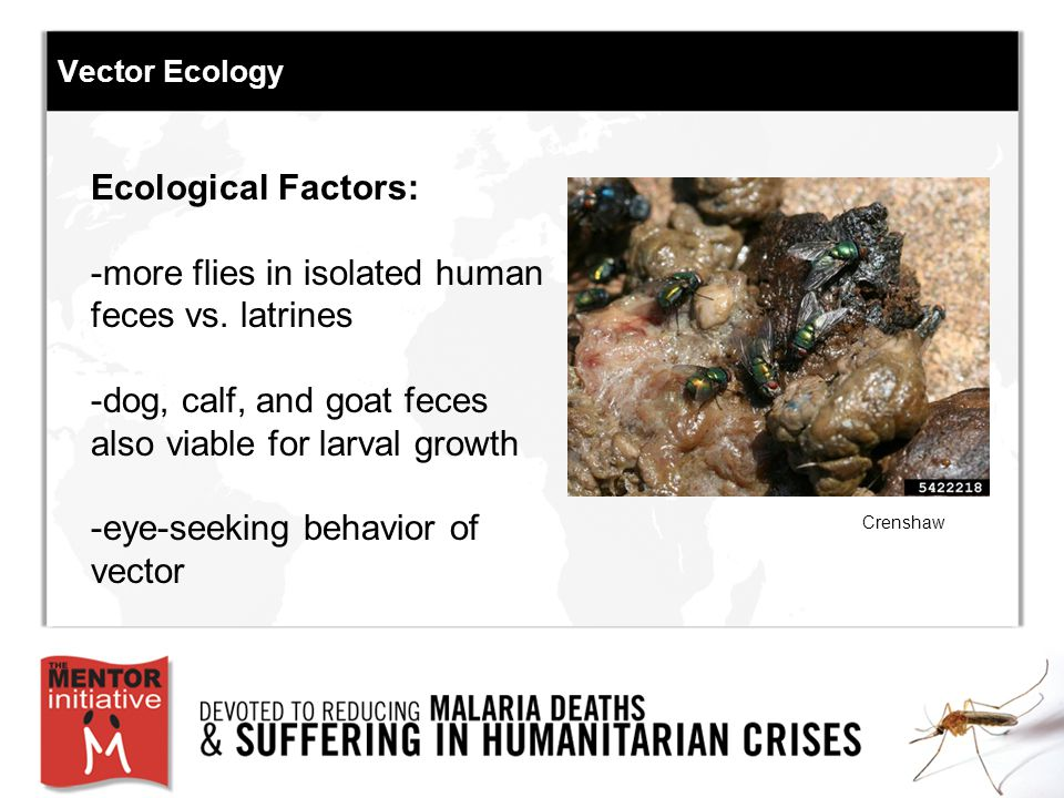 Vector Ecology Ecological Factors: -more flies in isolated human feces vs.