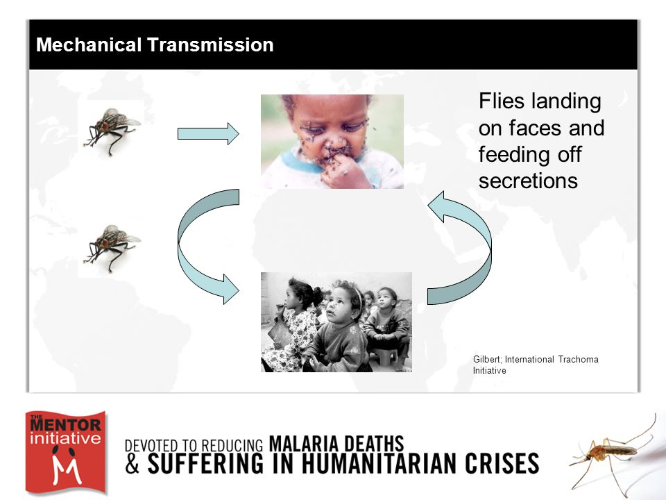 Mechanical Transmission Flies landing on faces and feeding off secretions Gilbert; International Trachoma Initiative