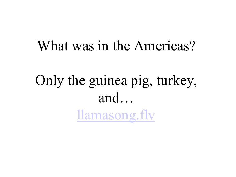 What was in the Americas? Only the guinea pig, turkey, and… llamasong.flv llamasong.flv