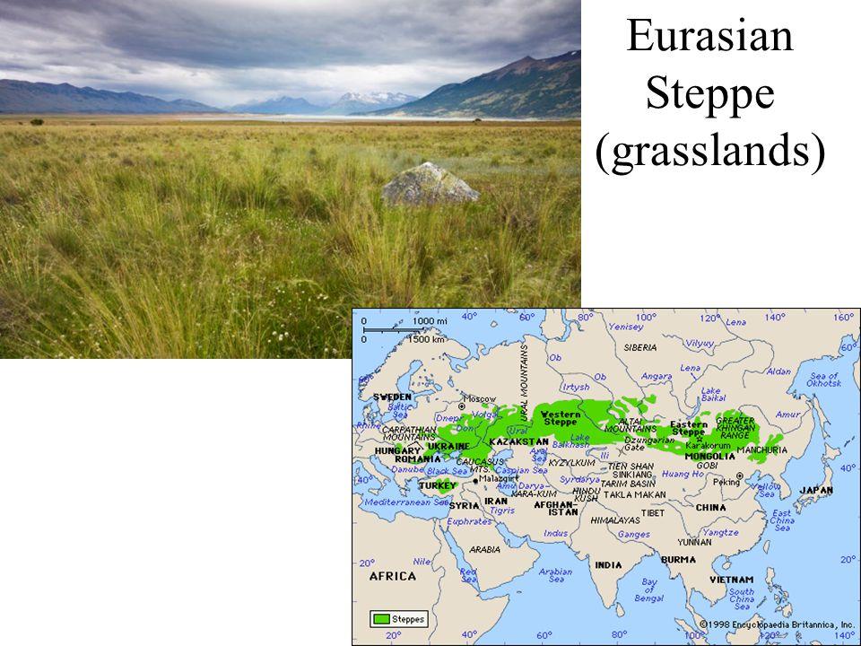 Eurasian Steppe (grasslands)
