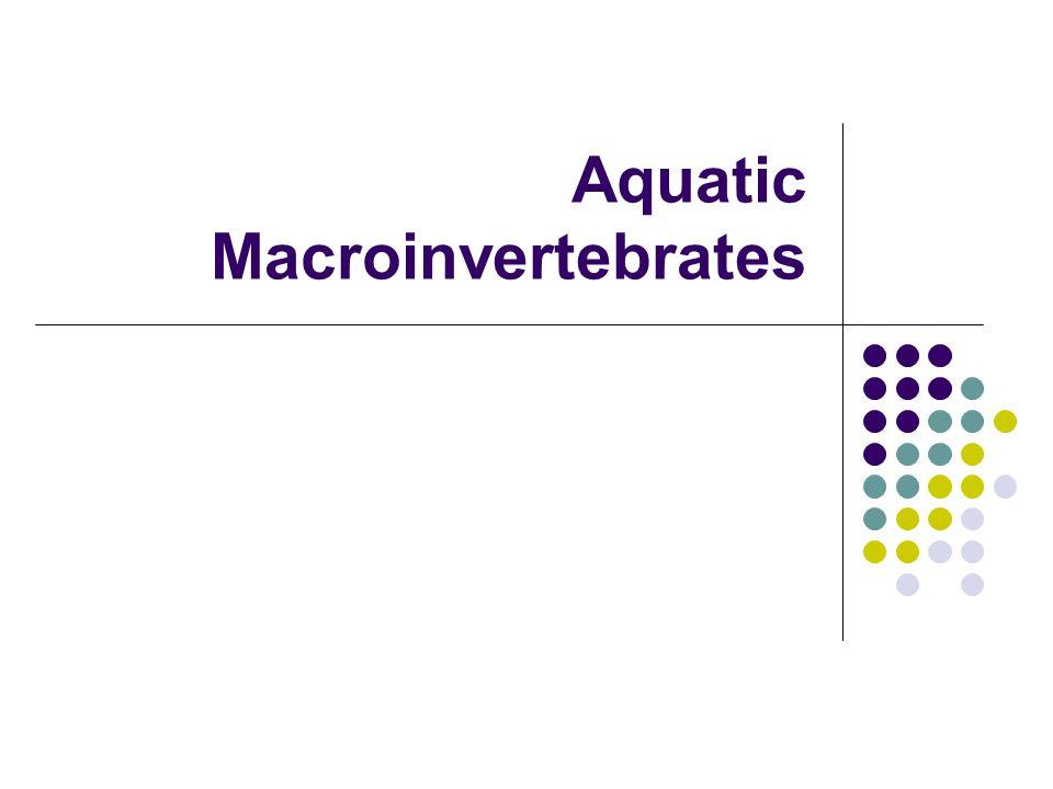 Aquatic Macroinvertebrates