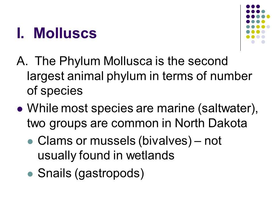 I. Molluscs A.