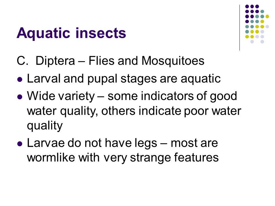 Aquatic insects C.
