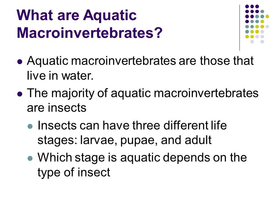 What are Aquatic Macroinvertebrates? Aquatic macroinvertebrates are those that live in water. The majority of aquatic macroinvertebrates are insects I