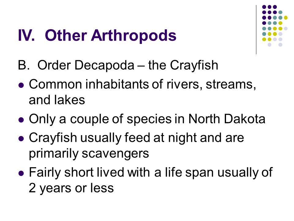 IV. Other Arthropods B.