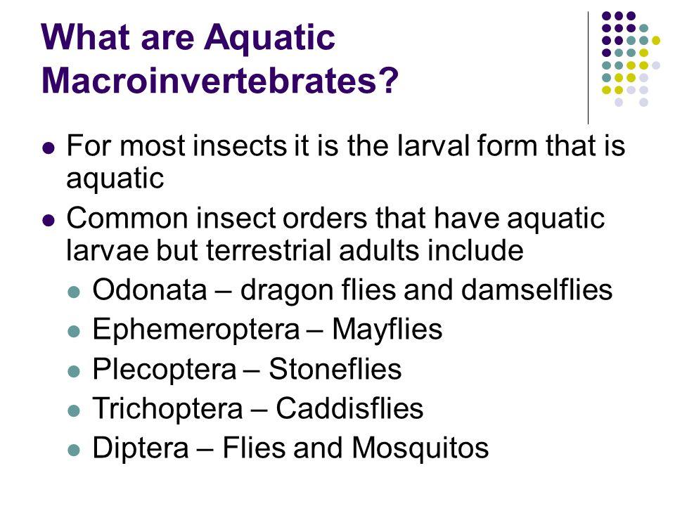 What are Aquatic Macroinvertebrates.