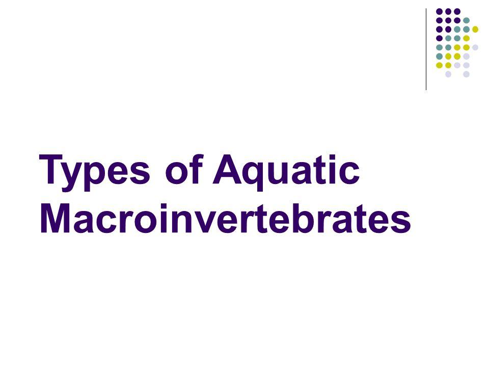 Types of Aquatic Macroinvertebrates