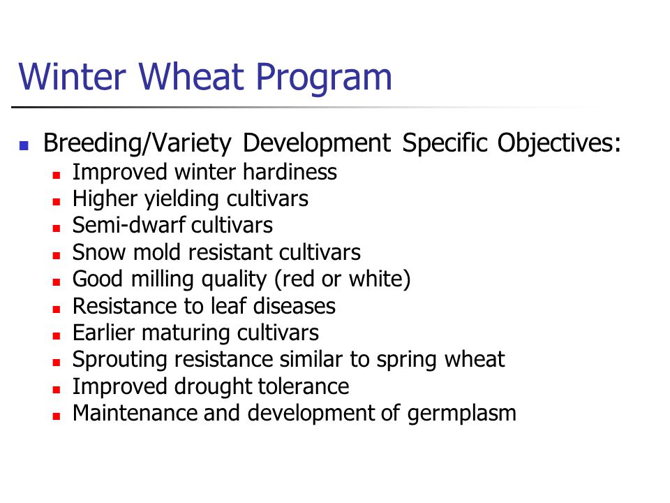 Winter Wheat Program Breeding/Variety Development Specific Objectives: Improved winter hardiness Higher yielding cultivars Semi ‑ dwarf cultivars Snow mold resistant cultivars Good milling quality (red or white) Resistance to leaf diseases Earlier maturing cultivars Sprouting resistance similar to spring wheat Improved drought tolerance Maintenance and development of germplasm