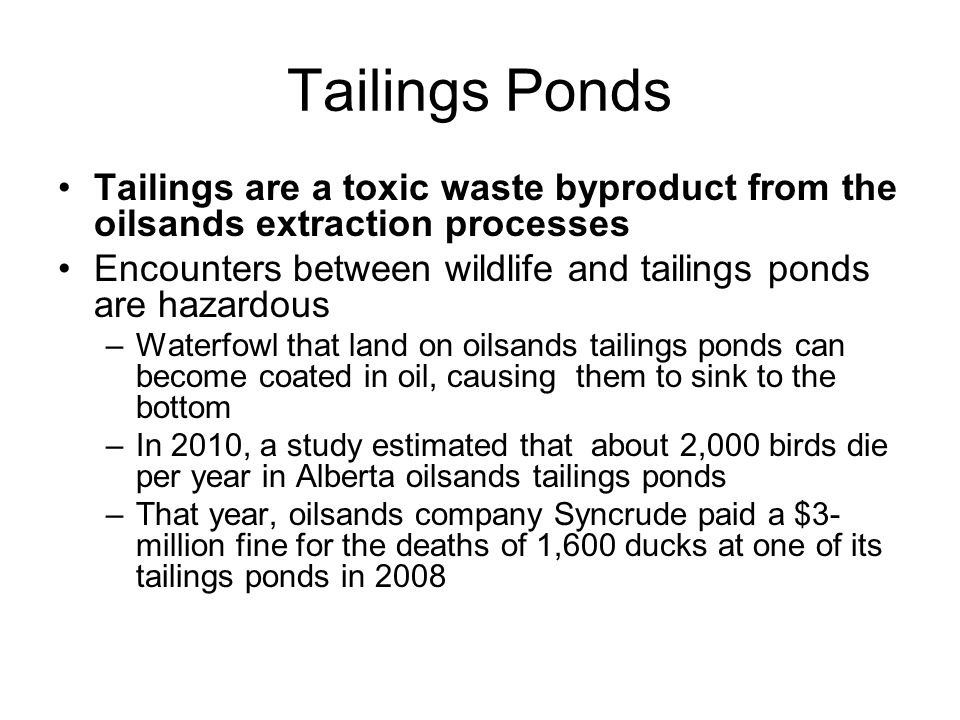 Tailings Ponds Tailings are a toxic waste byproduct from the oilsands extraction processes Encounters between wildlife and tailings ponds are hazardou