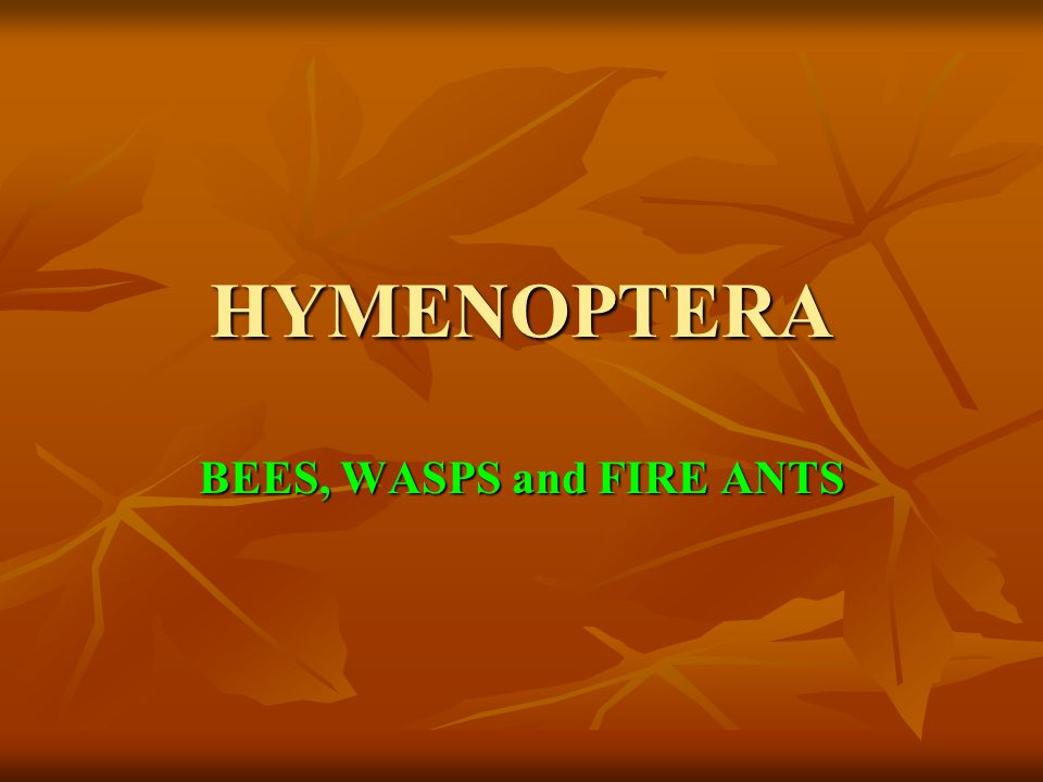 HYMENOPTERA BEES, WASPS and FIRE ANTS