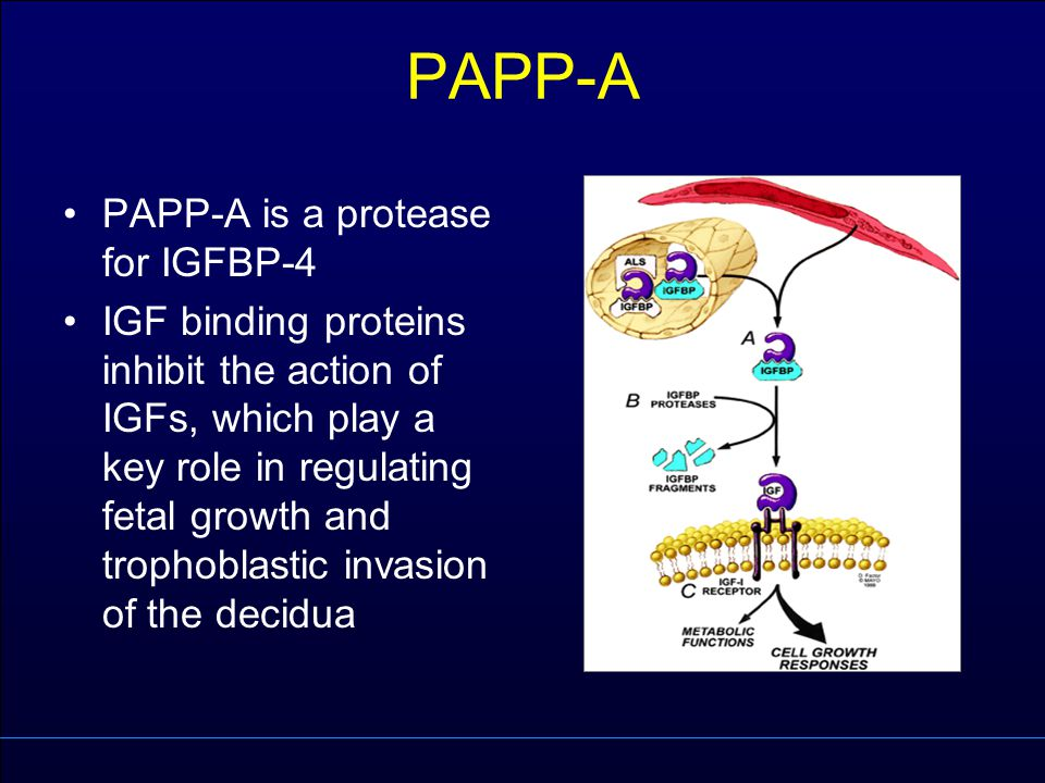 PAPP-A PAPP-A is a protease for IGFBP-4 IGF binding proteins inhibit the action of IGFs, which play a key role in regulating fetal growth and trophobl