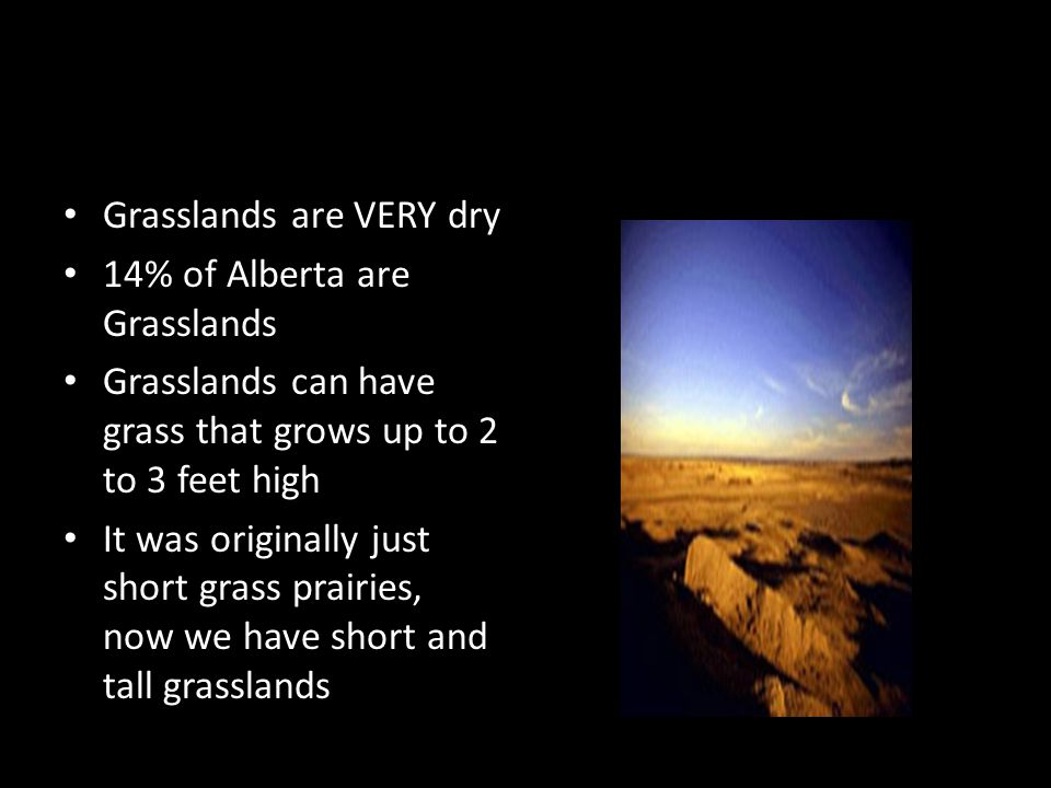 Grasslands are VERY dry 14% of Alberta are Grasslands Grasslands can have grass that grows up to 2 to 3 feet high It was originally just short grass prairies, now we have short and tall grasslands