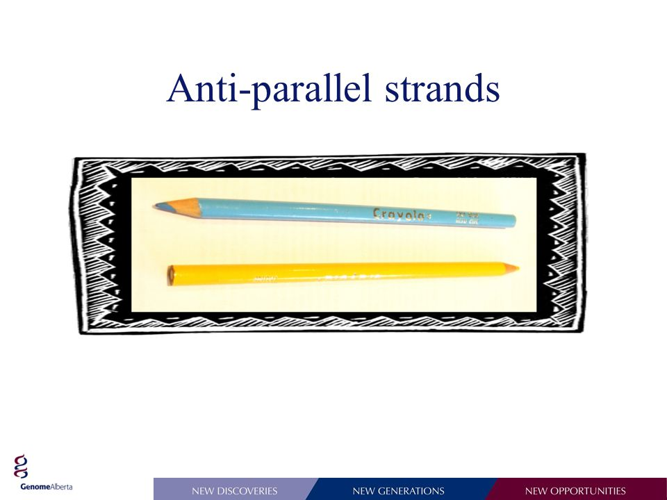 Anti-parallel strands
