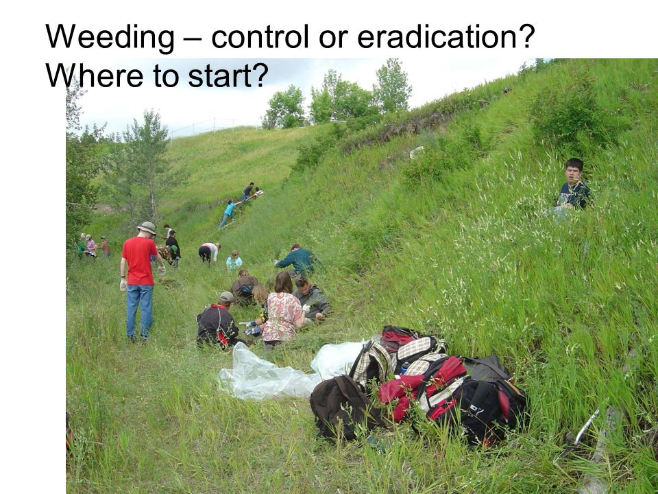 Weeding – control or eradication? Where to start?