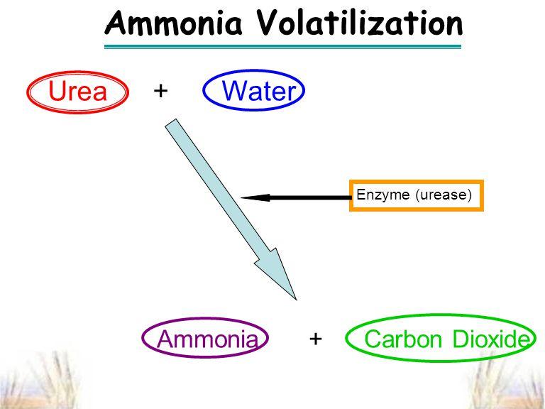 Ammonia Volatilization Ammonia + Carbon Dioxide Urea + Water Enzyme (urease)