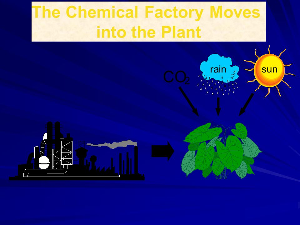 The Chemical Factory Moves into the Plant sunrain CO 2