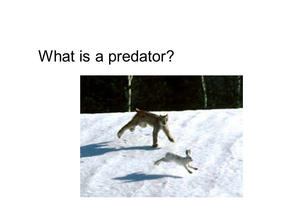 What is a predator?
