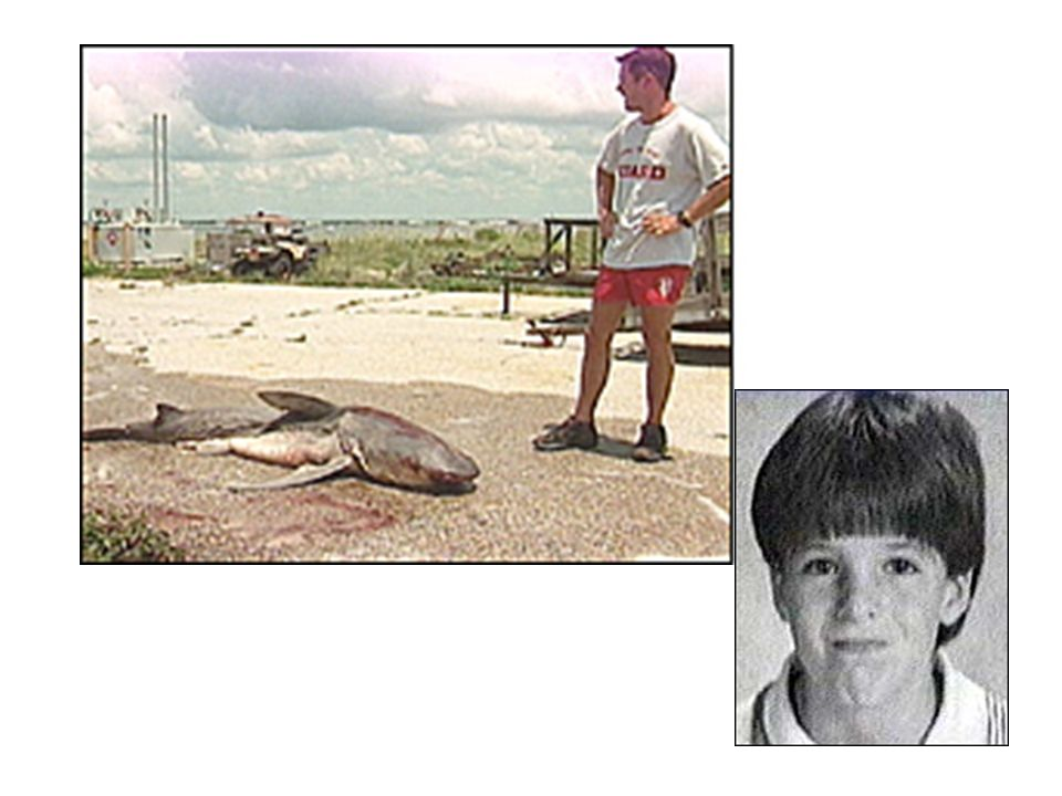 2008 death in Bahamas International Shark Attack File As long as people want to go in the water, some attacks will be rare, but inevitable.