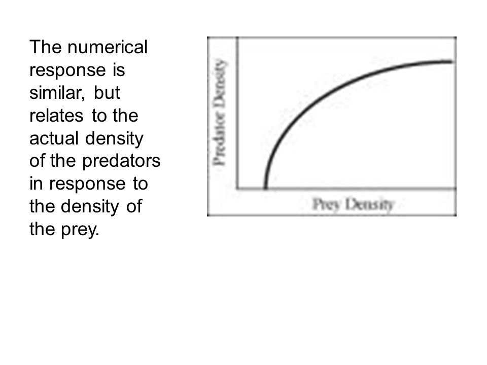 The numerical response is similar, but relates to the actual density of the predators in response to the density of the prey.