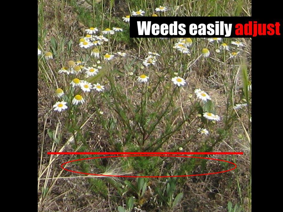 Weeds easily adjust