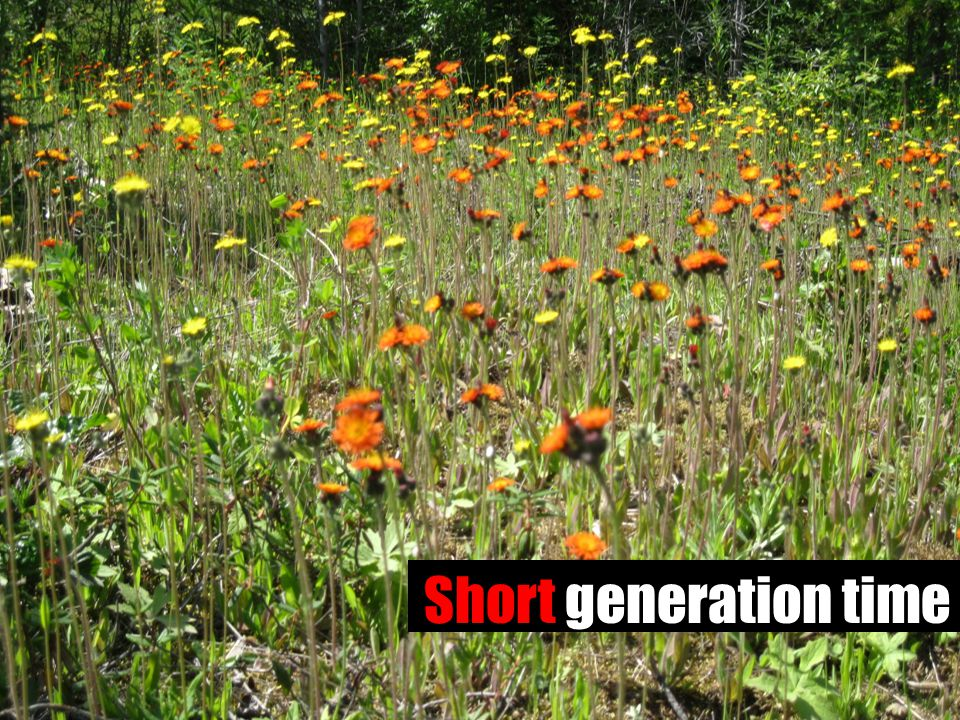 Short generation time