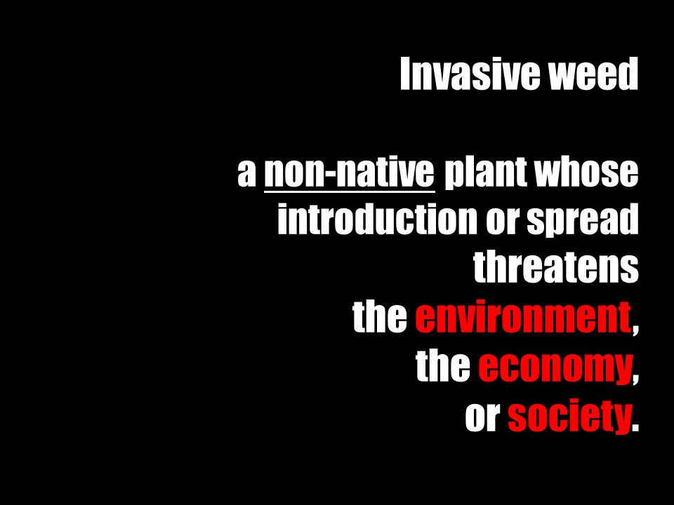 Invasive weed a non-native plant whose introduction or spread threatens the environment, the economy, or society.