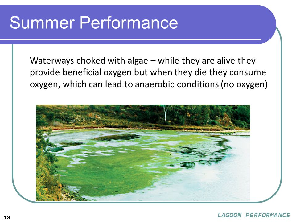 13 Summer Performance Waterways choked with algae – while they are alive they provide beneficial oxygen but when they die they consume oxygen, which can lead to anaerobic conditions (no oxygen) LAGOON PERFORMANCE