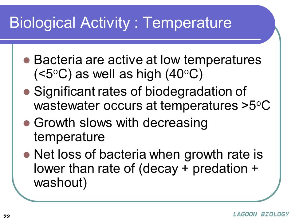 22 Biological Activity : Temperature Bacteria are active at low temperatures (<5 o C) as well as high (40 o C) Significant rates of biodegradation of wastewater occurs at temperatures >5 o C Growth slows with decreasing temperature Net loss of bacteria when growth rate is lower than rate of (decay + predation + washout) LAGOON BIOLOGY