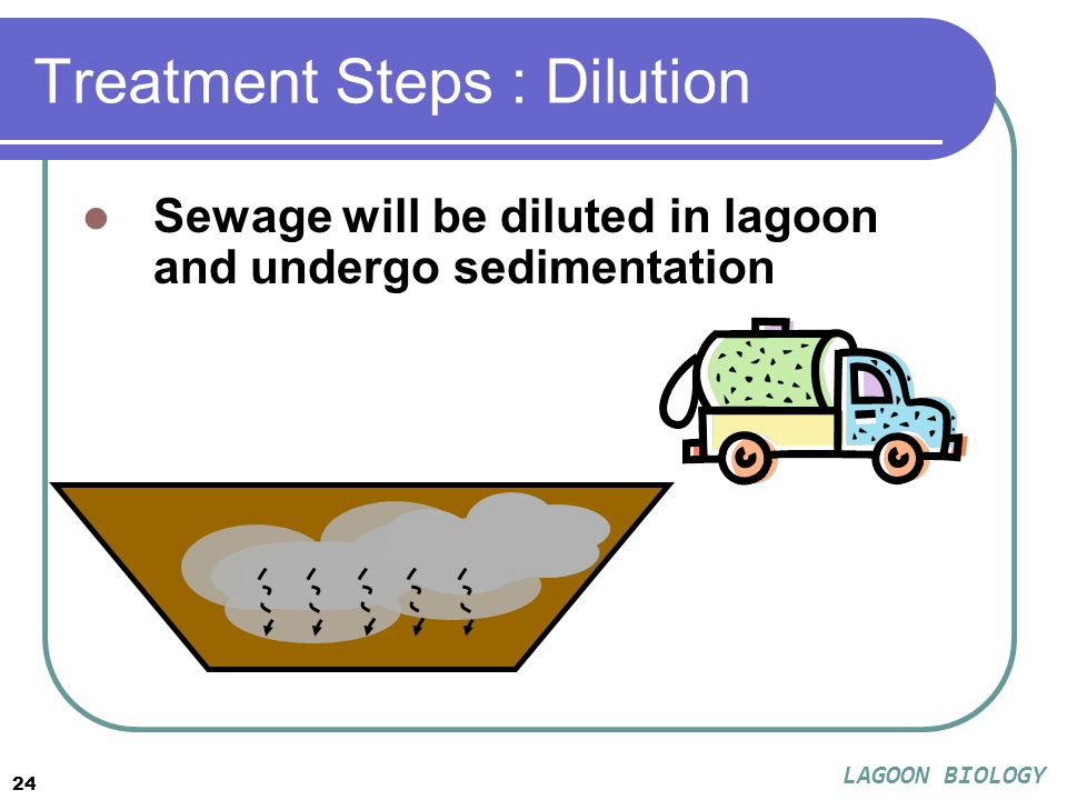 24 Treatment Steps : Dilution Sewage will be diluted in lagoon and undergo sedimentation LAGOON BIOLOGY