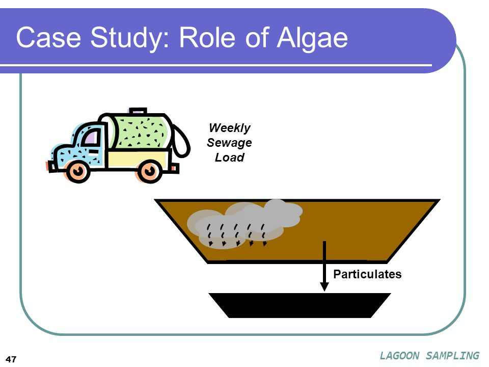 47 Case Study: Role of Algae Particulates Weekly Sewage Load LAGOON SAMPLING