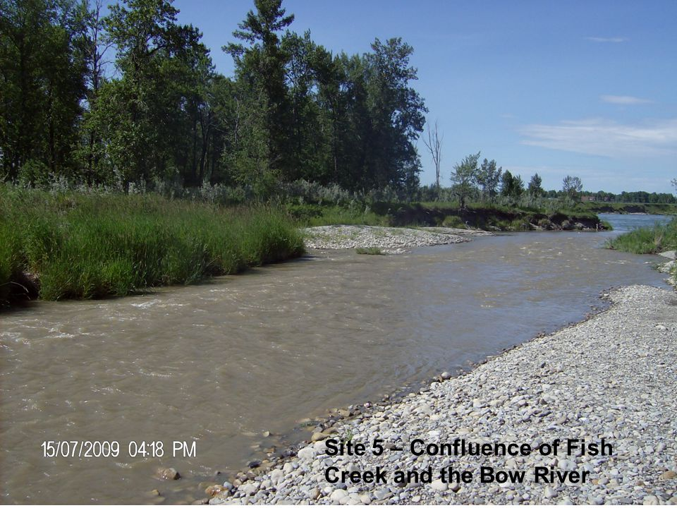 Site 5 – Confluence of Fish Creek and the Bow River