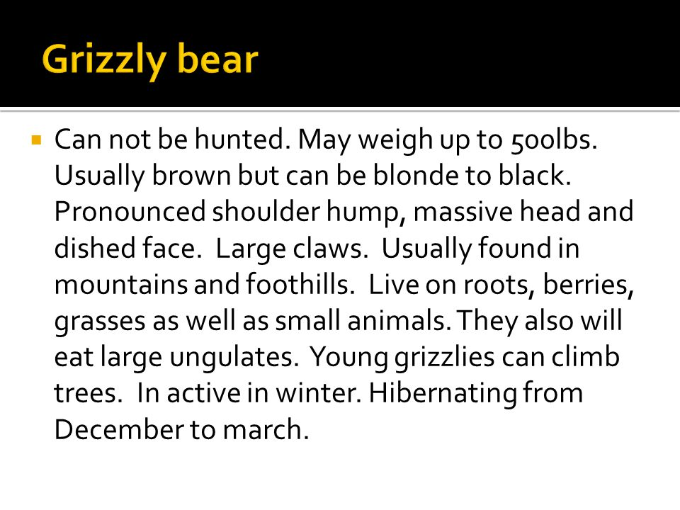  Can not be hunted. May weigh up to 500lbs. Usually brown but can be blonde to black.