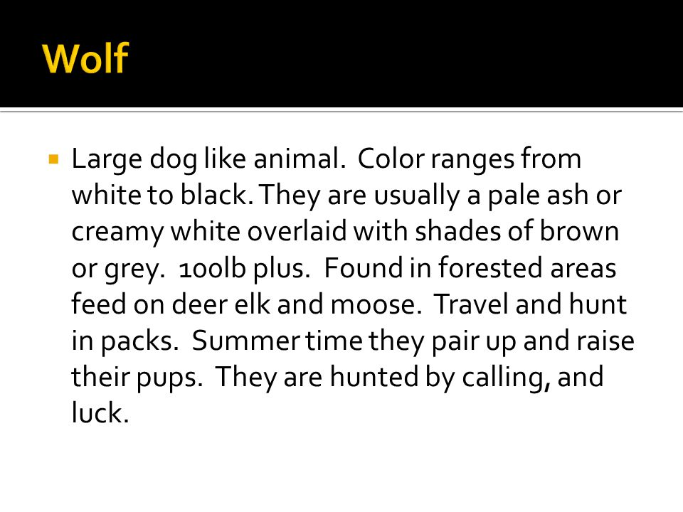  Large dog like animal. Color ranges from white to black.