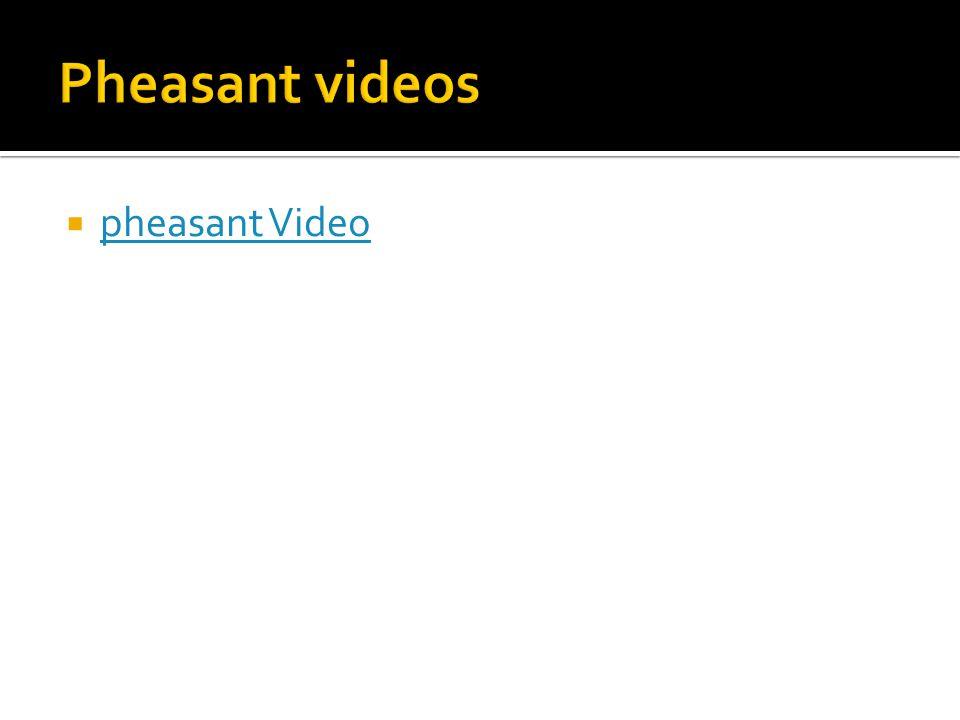  pheasant Video pheasant Video