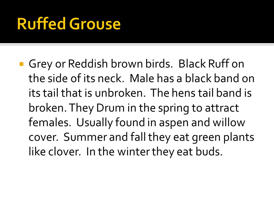  Grey or Reddish brown birds. Black Ruff on the side of its neck.