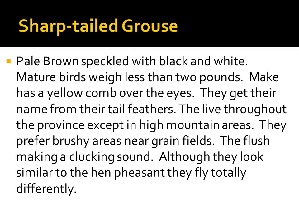  Pale Brown speckled with black and white. Mature birds weigh less than two pounds.