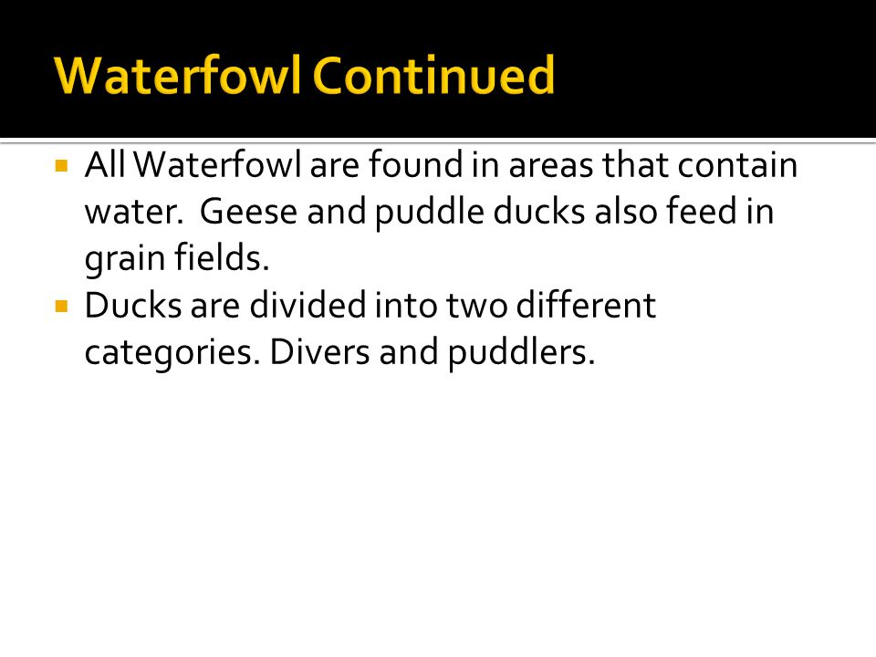  All Waterfowl are found in areas that contain water.