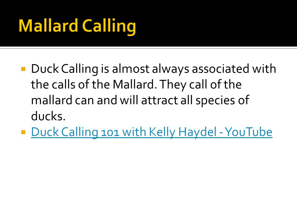  Duck Calling is almost always associated with the calls of the Mallard.