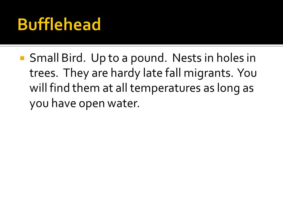  Small Bird. Up to a pound. Nests in holes in trees.