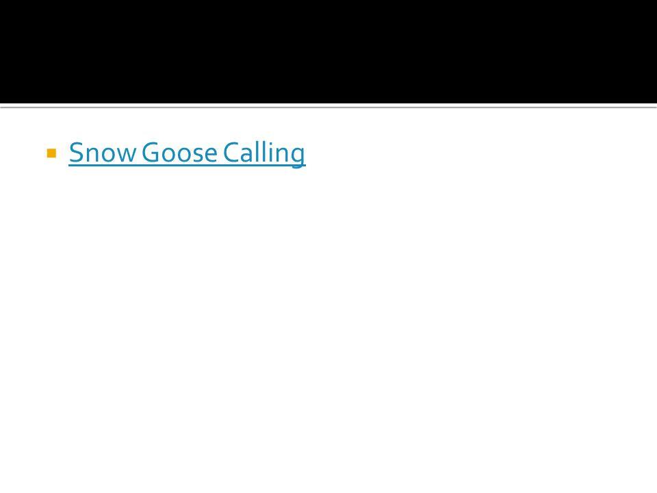  Snow Goose Calling Snow Goose Calling