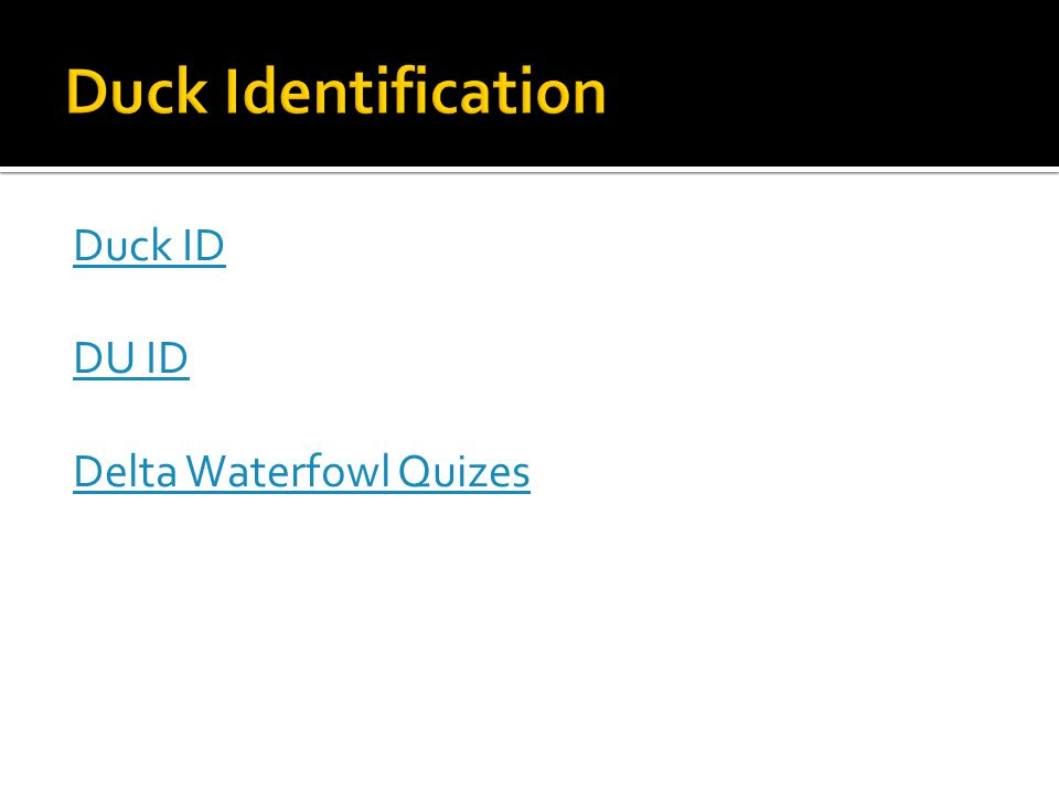 Duck ID DU ID Delta Waterfowl Quizes