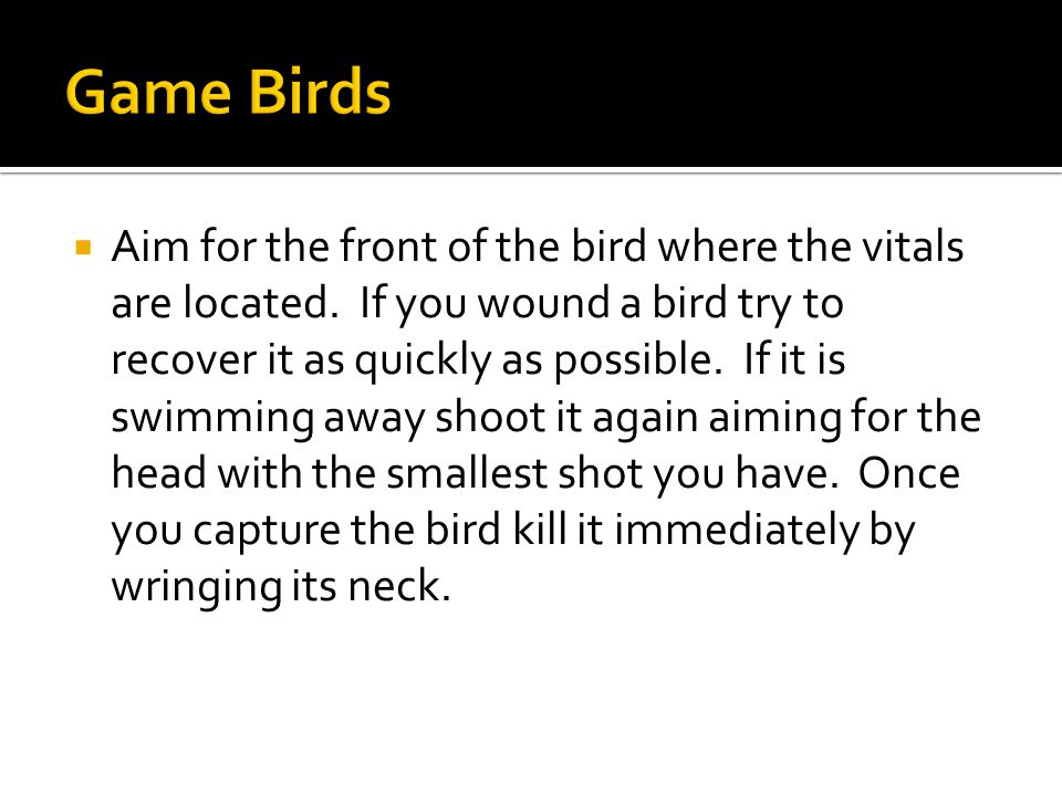  Aim for the front of the bird where the vitals are located.