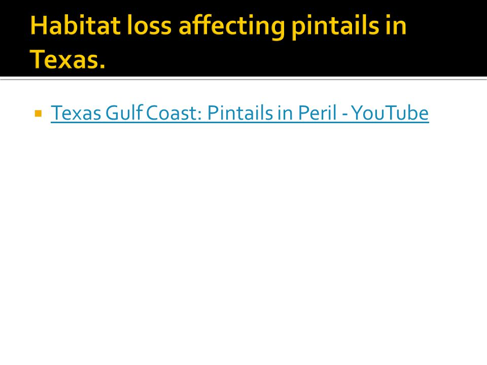  Texas Gulf Coast: Pintails in Peril - YouTube Texas Gulf Coast: Pintails in Peril - YouTube
