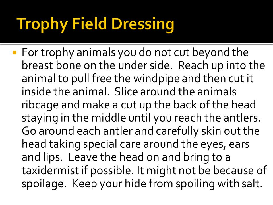  For trophy animals you do not cut beyond the breast bone on the under side.